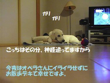 RIMG0128.jpg