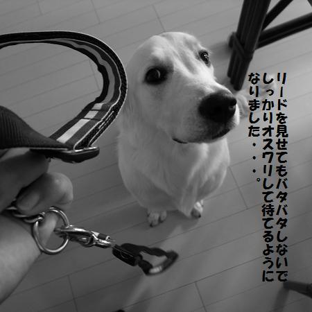 _0010734.jpg