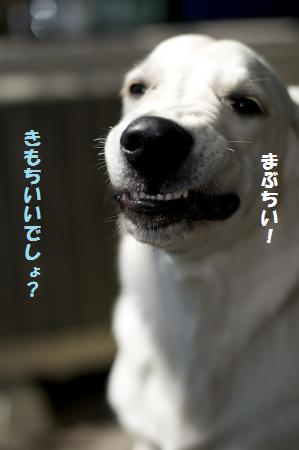 _DSC0524.jpg