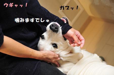 _DSC0807.jpg