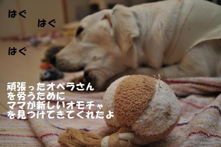 _DSC0858.jpg