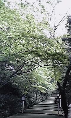 白山ひめ神社・参道