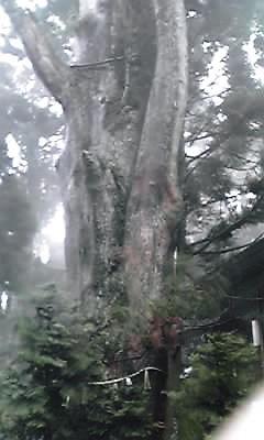 とが神社奥宮ご神木