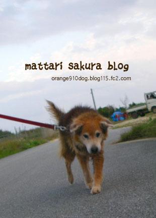 kuma_20071225031326.jpg