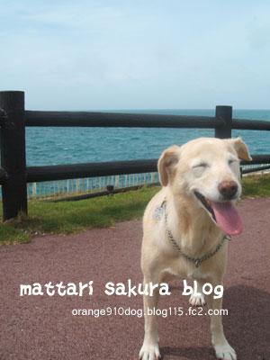 sakura-smile.jpg