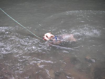 だいの初泳ぎ