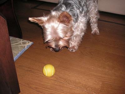 ボール投げて!