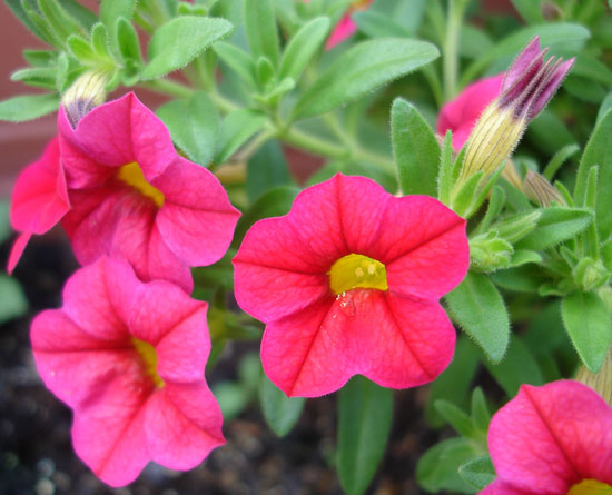 お庭の花です