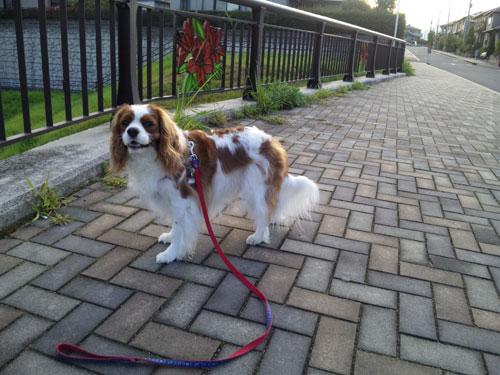 早朝散歩たい