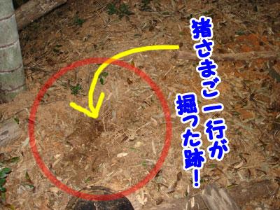 猪くんの掘り方