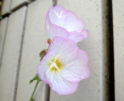 寄り添う花たち