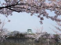 2008お花見 大阪城