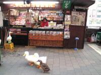 地下鉄動物園前 アヒルの新聞屋さん