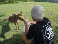シカせんべいと鹿男