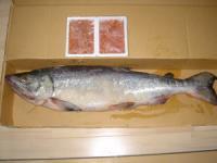 北海道からの贈り物 新巻鮭