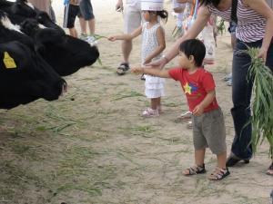 牛にエサをやる第一子