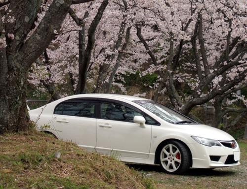 シビックと桜