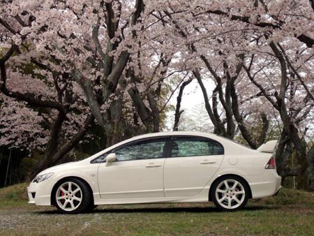 シビックと桜5