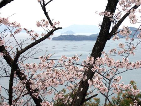 桜と瀬戸内海5