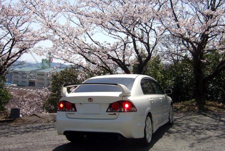 シビックリアと桜