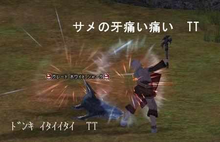 20051105172238.jpg
