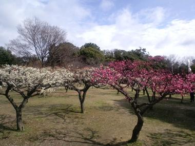 春2010-01