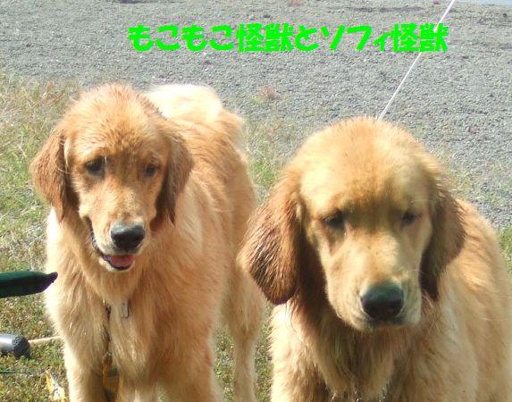 134_20080916225921.jpg