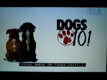 dog1011