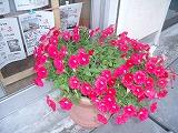 gazou_20090629090845.jpg