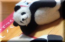 panda2-1.jpg