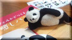 panda3-1.jpg