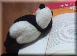 panda6-1.jpg
