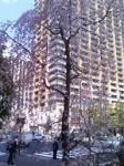 神保町の交差点で見かけた、高層ビルをバックに花を咲かせる枝垂桜。