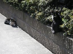 穏やかな早春の晴天。ネコもお昼寝。