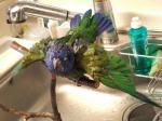 水浴びぱる