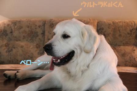 Kaiだぞ