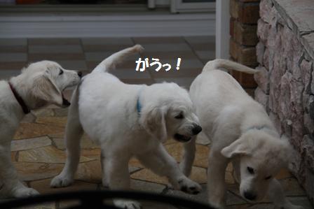 29_20100622155229.jpg