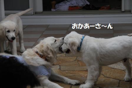 31_20100622155253.jpg