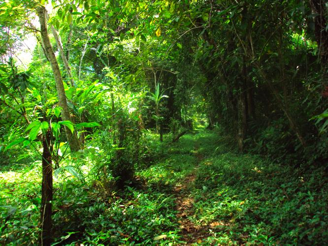 th_ジャングル1