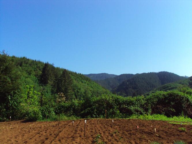 th_フレッド畑4