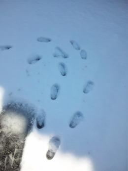 110215 雪03