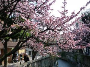 0202 あたみ桜3