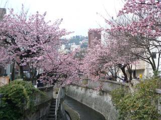 0202 あたみ桜5