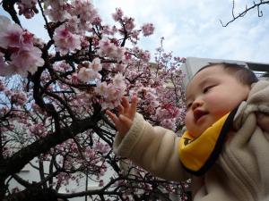 0202 あたみ桜7