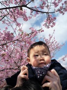 0223 河津桜2