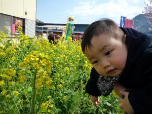 0223 河津桜4