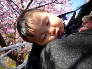 0223 河津桜9
