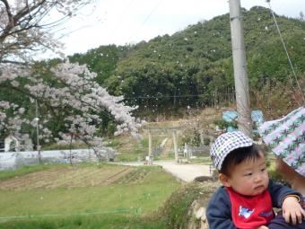 0411 花まつり03