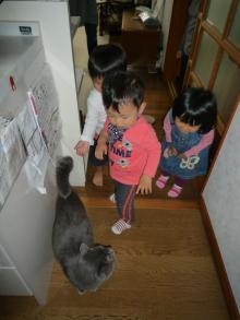 101020 おネコ様と01