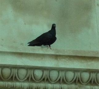 ブログ用 大英博の鳩